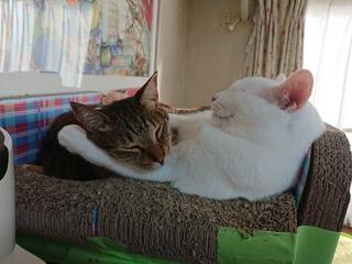 腕枕.JPG